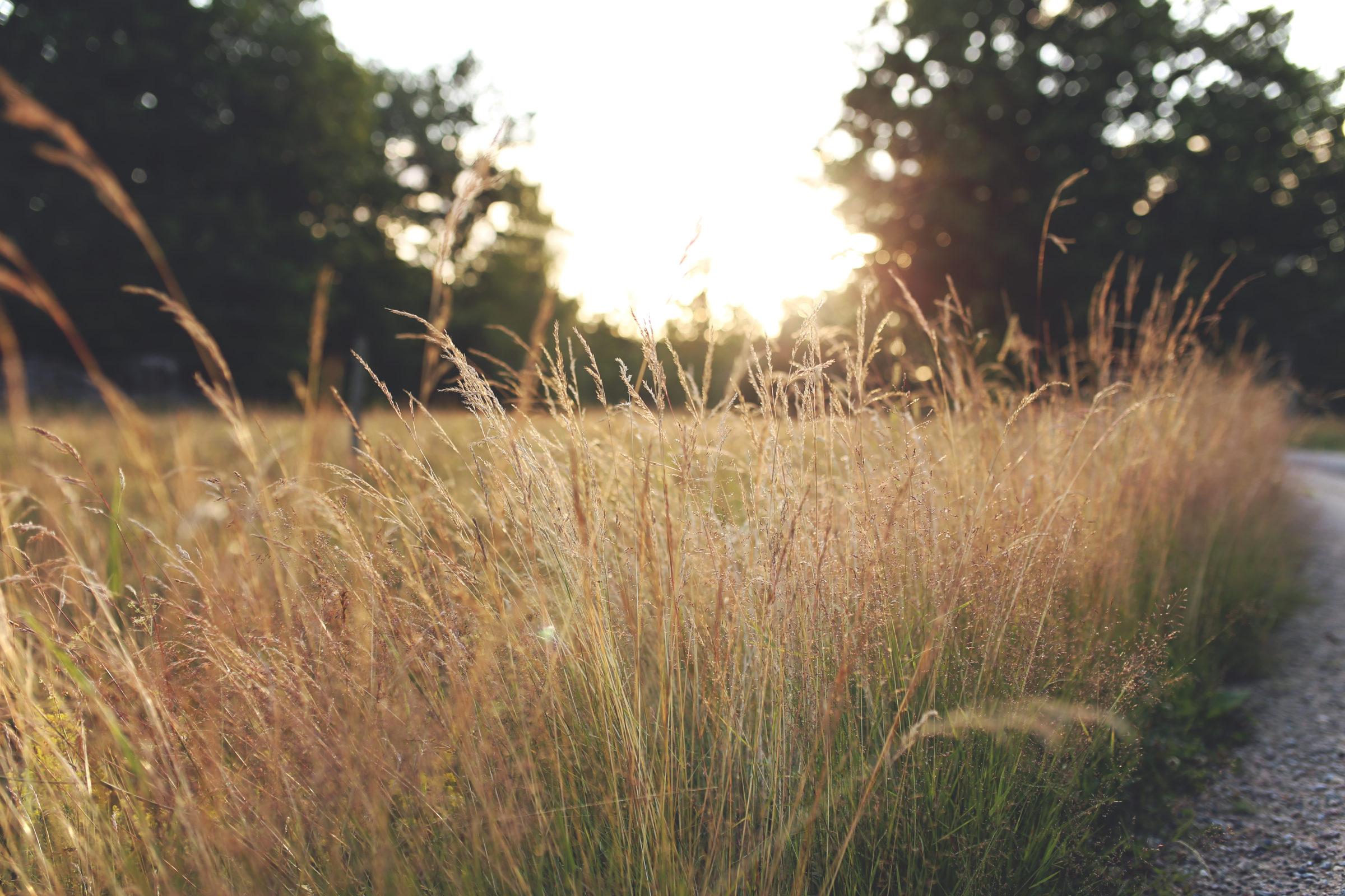 Sun sets in field