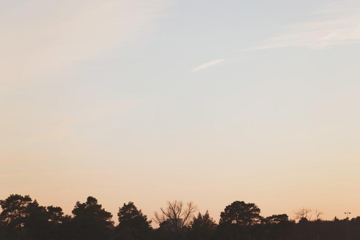 Tree tops in the sky