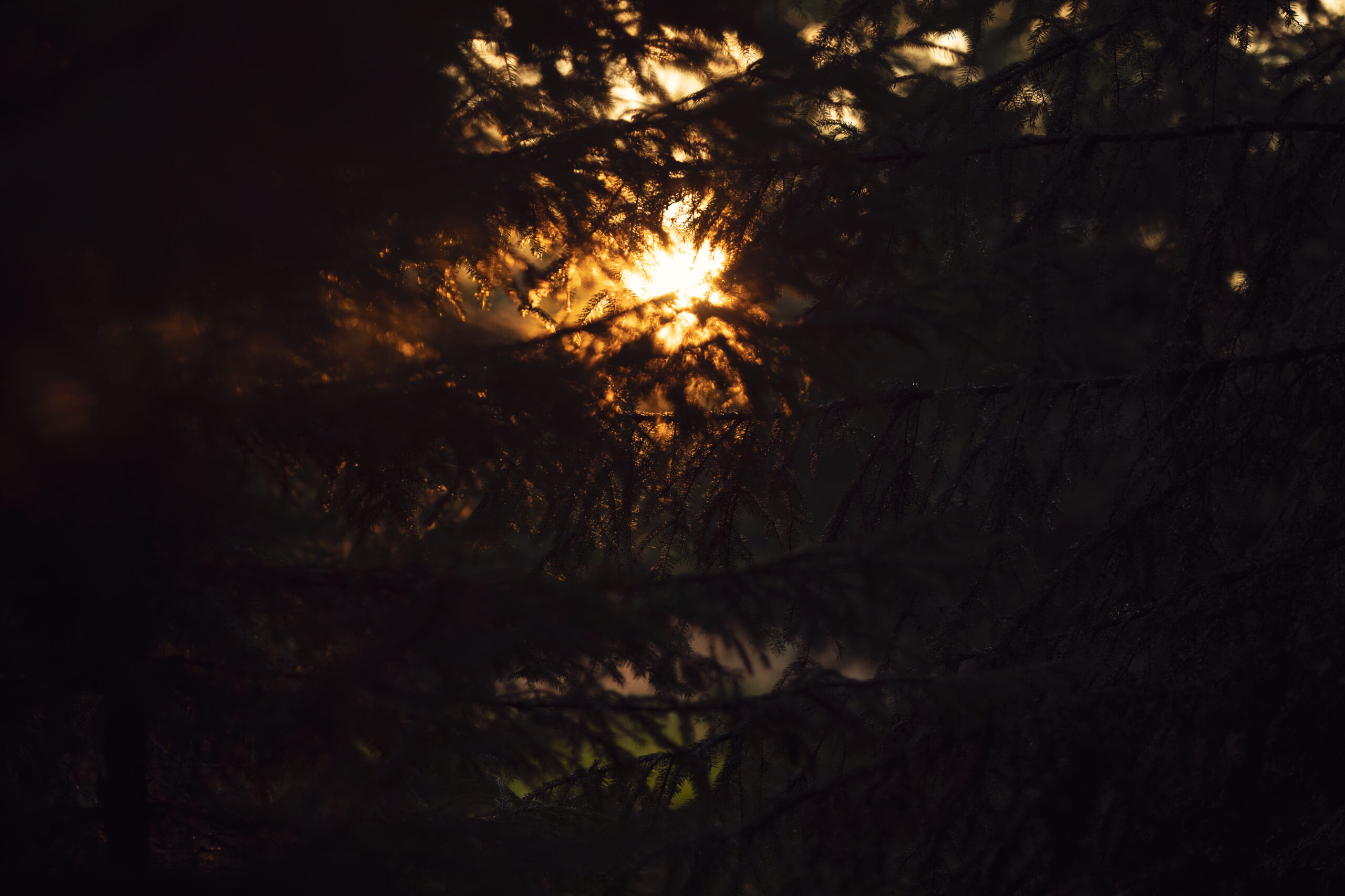 sunset in swedish forest