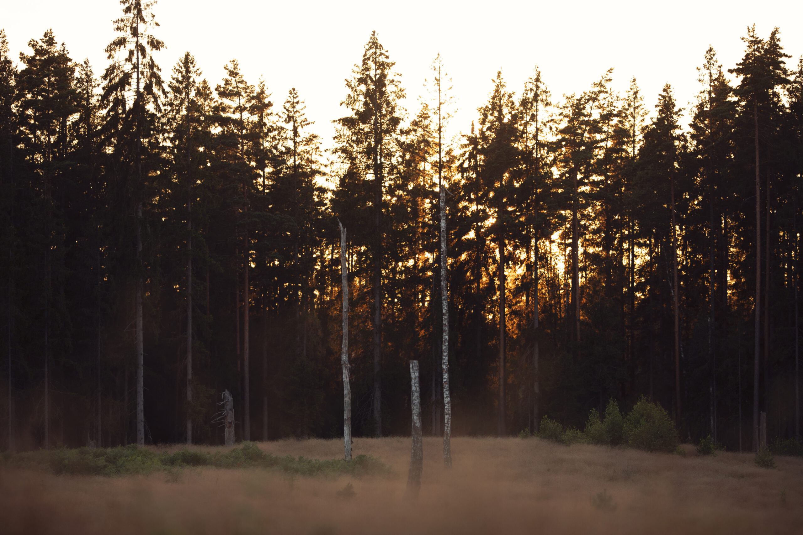 sun setting behind forest trees